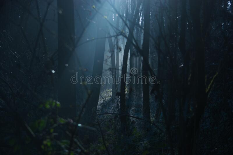 Trees in scary forest at night stock photos