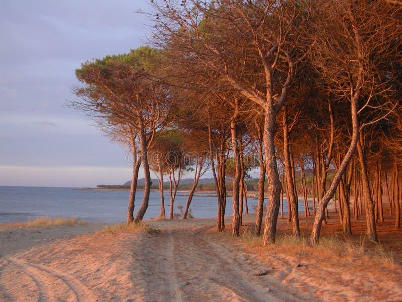 Trees & Sea royalty free stock photography