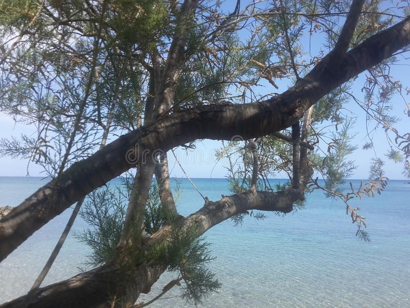 Trees by the sea royalty free stock photo