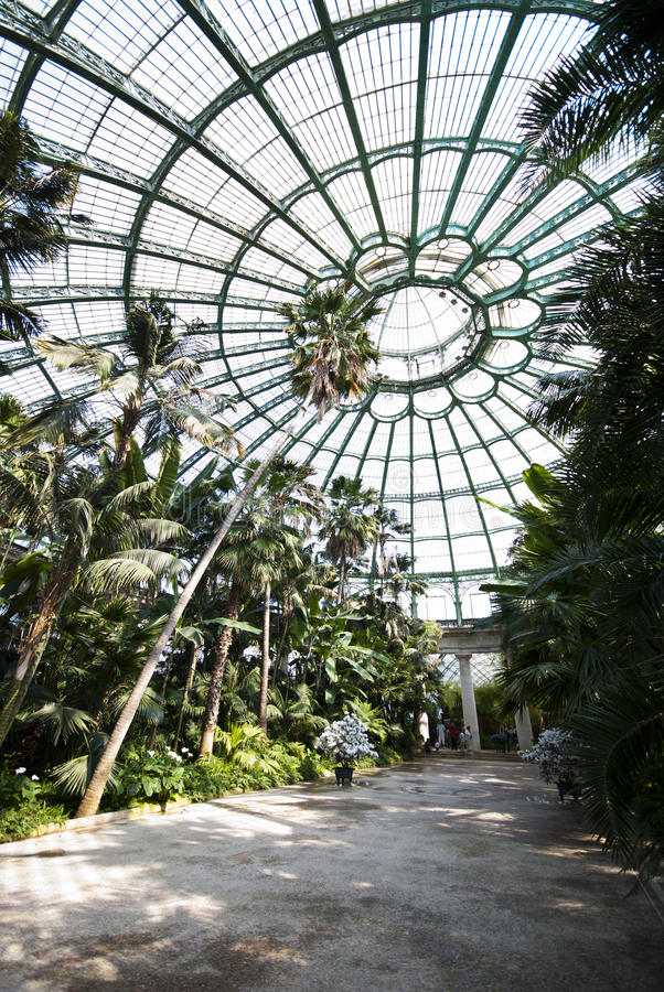 Trees in Serre Royales. Indoor tropical trees in Serre Royales - shot with an ultra wide lens - Bruxelles 2011 royalty free stock photo