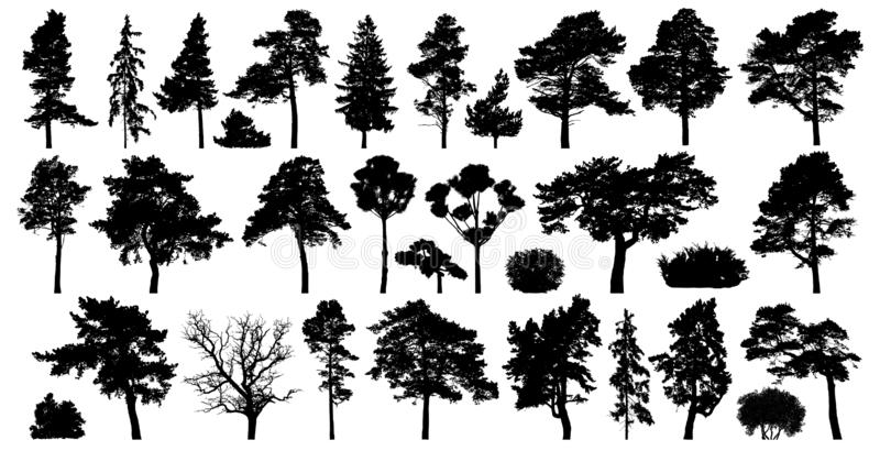 Trees set isolated on white background. Coniferous forest silhouette.  stock illustration