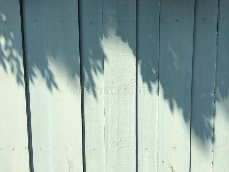 Trees shadow on the blue wall stock photos