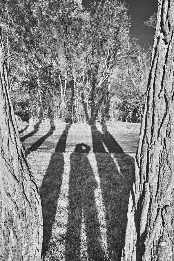 Trees and shadow royalty free stock photos