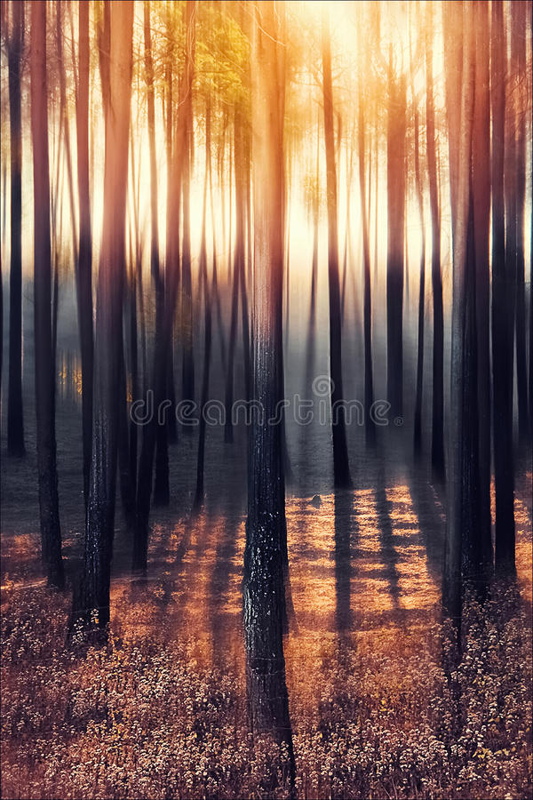 Trees with shadows in the forest at dawn in the mountains of the Himalayas. Nepal.  royalty free stock photos