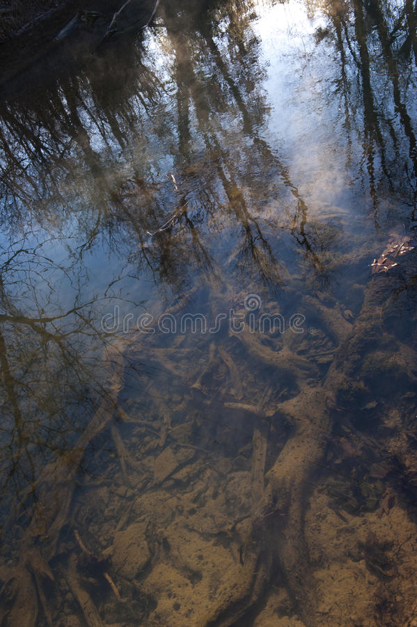 Trees On Shallow Creek Bed Stock Photos