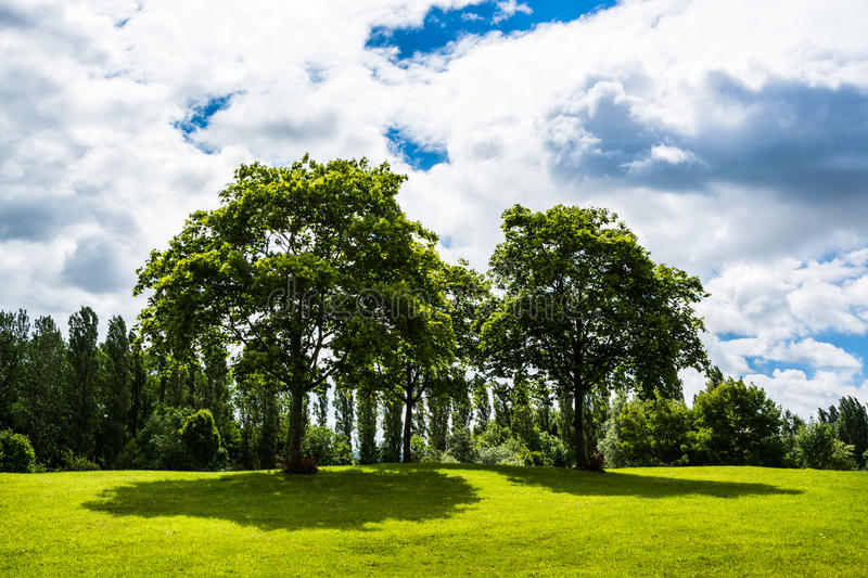 Trees shined under the sunlight passing clouds in summer. In UK stock photos