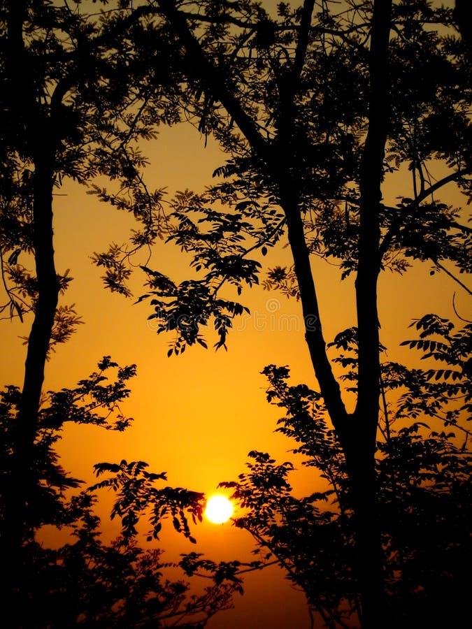 Free Trees Silhouette Stock Photos - 5420293