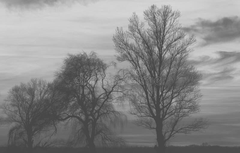 Trees silhouette - black and white stock photo