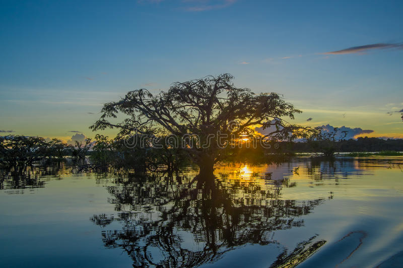 Trees silhouetted against an orange sky at sunset over Laguna Grande in the Cuyabeno Wildlife Reserve National Park, in. Ecuador stock photo