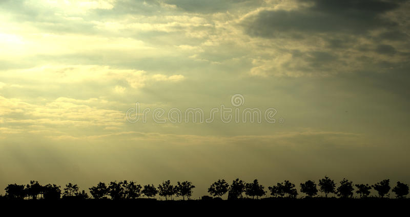 Trees silhouetted against the sky. In Cambodia royalty free stock photo