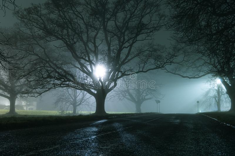 Trees, silhouetted against street lights, on a country road, on a moody, spooky, atmospheric winters night stock photos