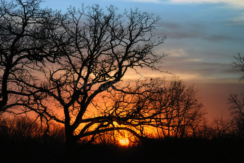 Download Trees Silhouetted At Sunset Stock Image - Image: 3492127