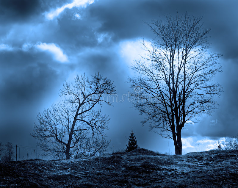 Download Trees silhouettes stock image. Image of rural, park, branches - 2249407