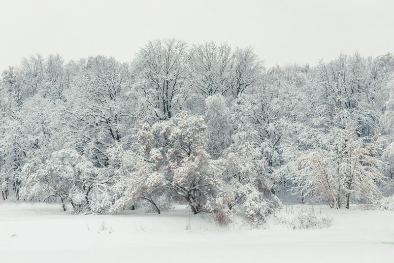 Trees sinking in snowdrifts after a heavy snowfall, beautiful landscape royalty free stock photo