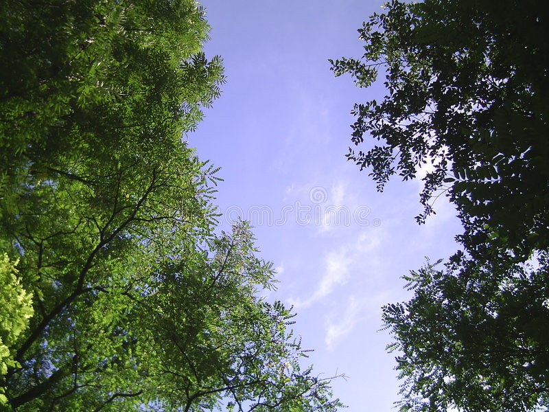 Trees and sky stock photography