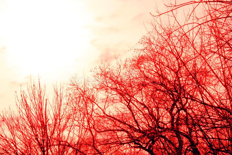 Trees And Sky Free Public Domain Cc0 Image