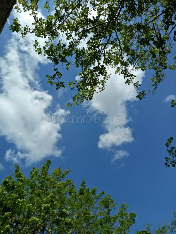 Trees sky cloud and beautiful wather stock photos