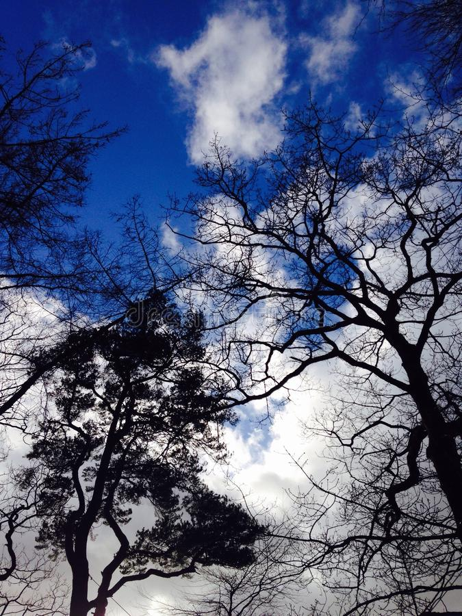 Trees in the Sky royalty free stock photography