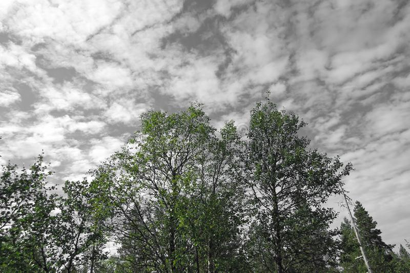 Trees and the sky in green and grey royalty free stock images