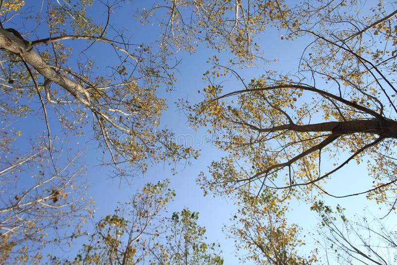 Trees and sky royalty free stock photo