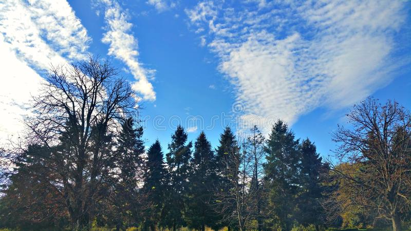 Trees and sky. stock images