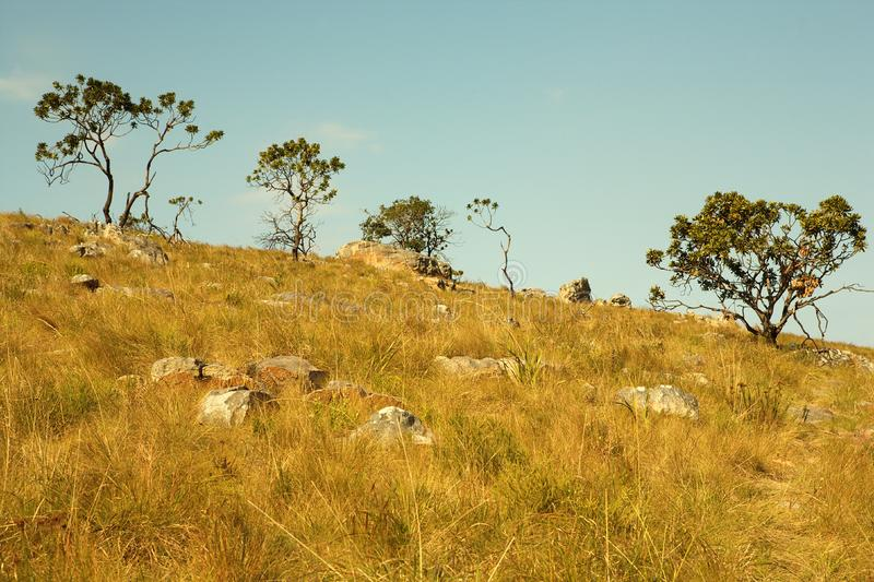 Download Trees on a slope stock image. Image of trees, plants - 10269625