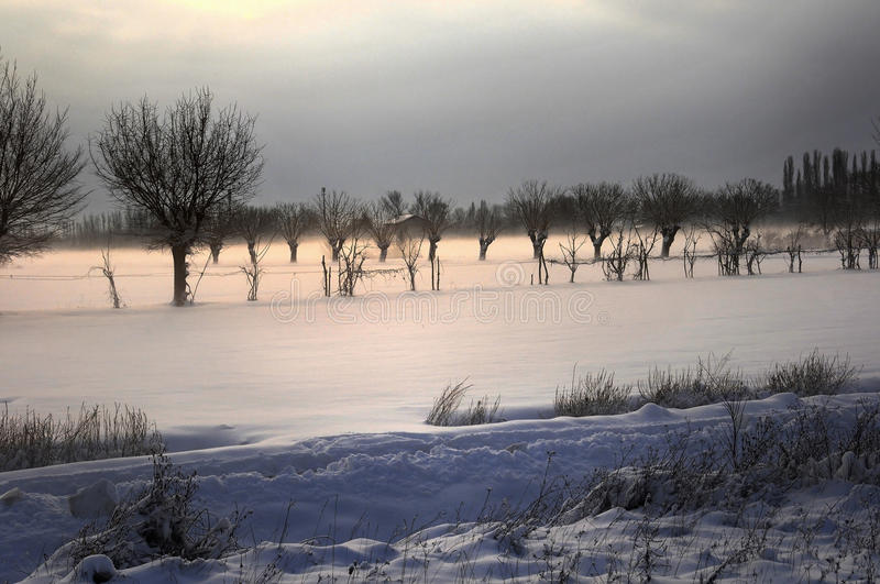 Trees in the snow. The sun is coming after the snowfall royalty free stock photos
