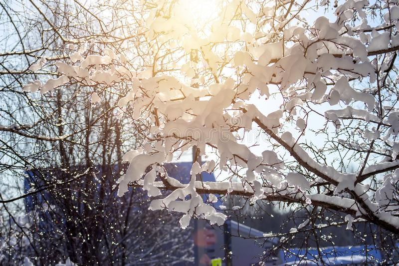 Trees in snow against the background of the blue sky. The beautiful Flakes of snow lying on tree branches. Winter background. Cold, frost, landscape, nature royalty free stock image
