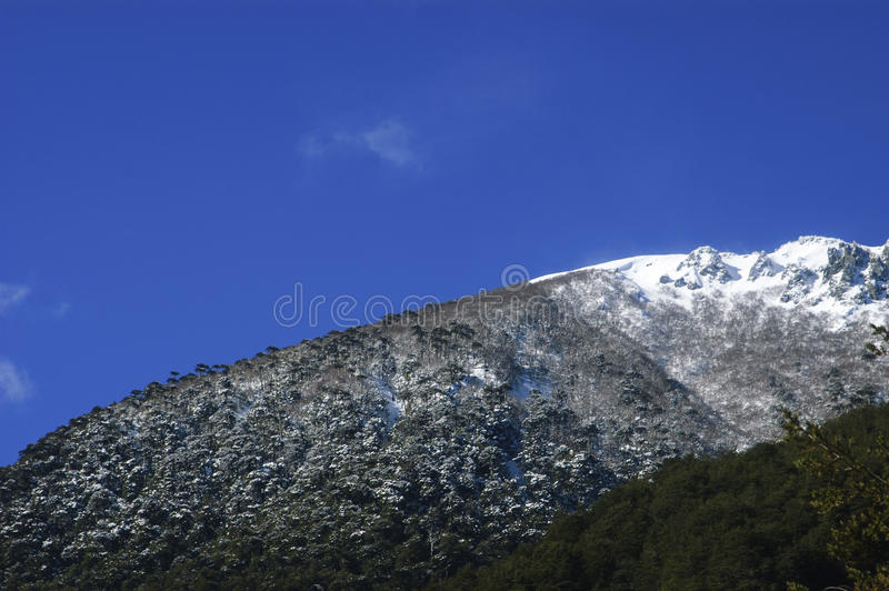Download Trees with snow stock photo. Image of mountain, forest - 37215034