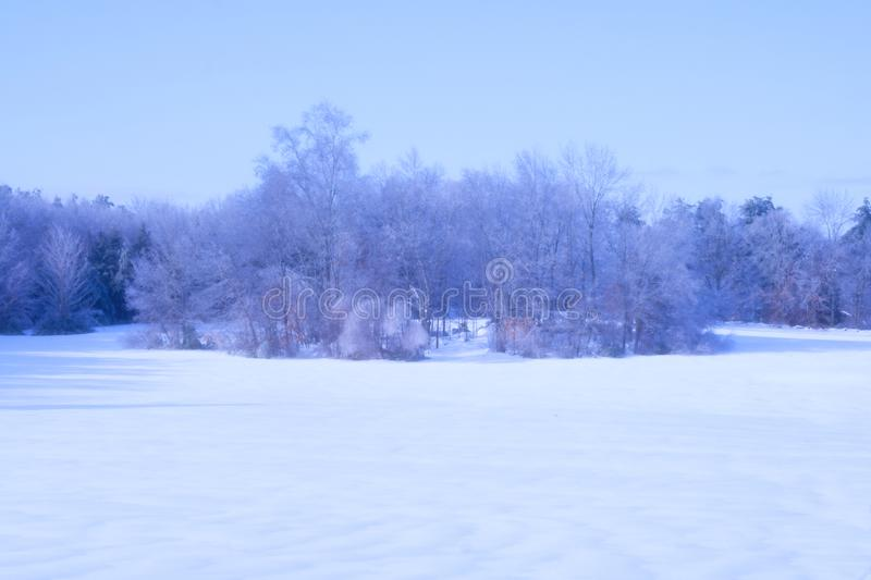 Trees with Snow on Ground and Blue Sky stock photos