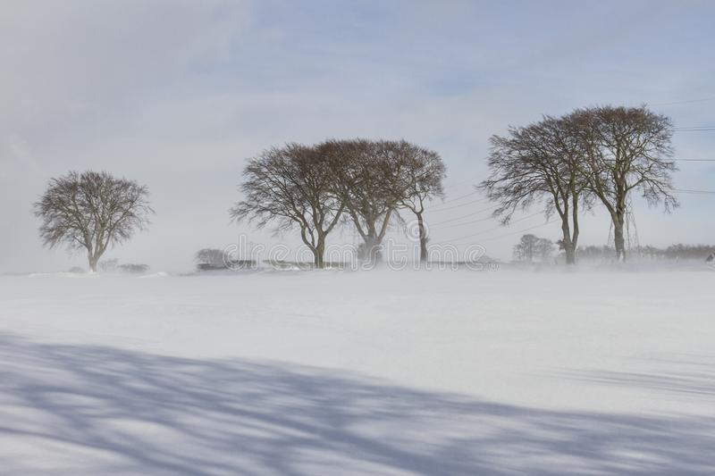 Trees in the snow stock image
