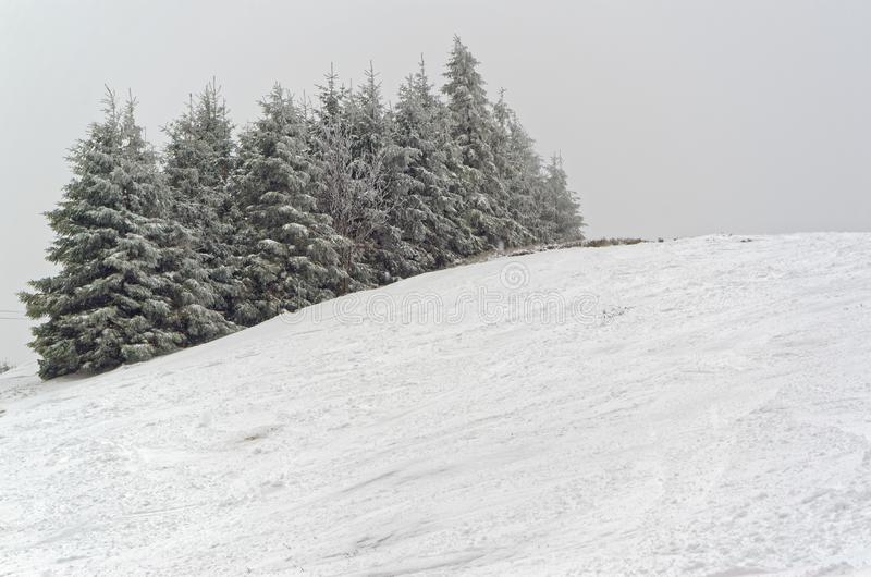 Trees in snow on the peak of a ski piste, Sonnenberg ski piste in Harz, Germany. Trees in snow on the peak of a ski piste, Sonnenberg ski piste in Harz mountains royalty free stock photography