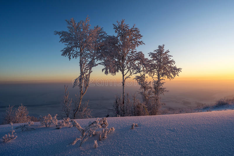 Trees in the snow at sunrise stock photos