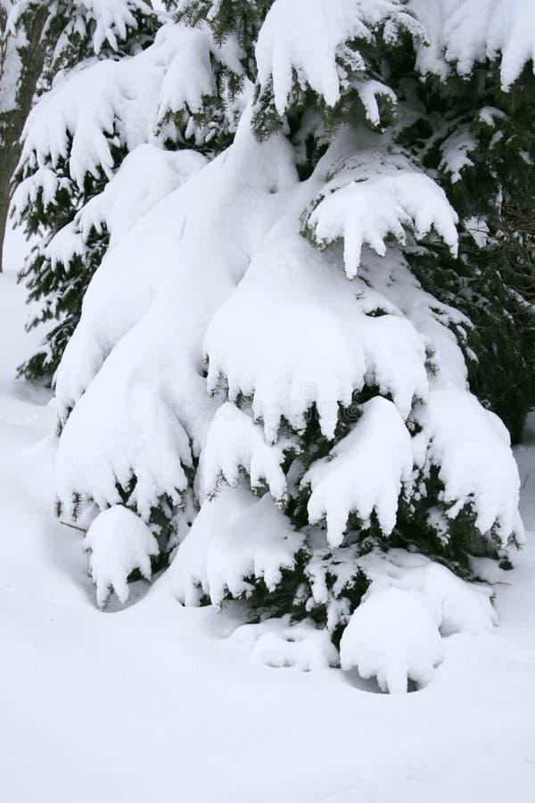 Download Trees In Snow: Winter Season Stock Image - Image: 7221831