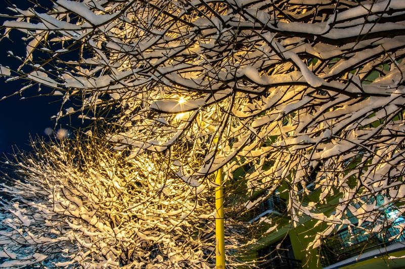 Snow covered trees at night in a park stock photo