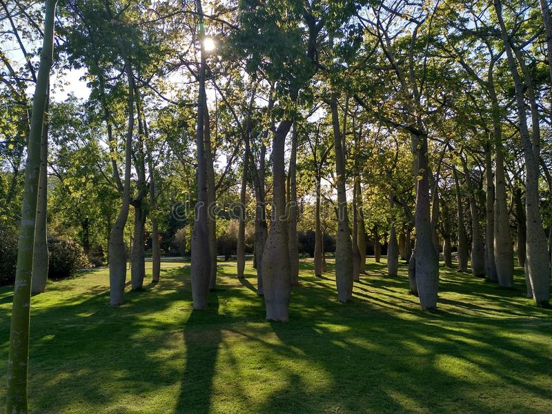 Deep forest in spain 1 royalty free stock photography