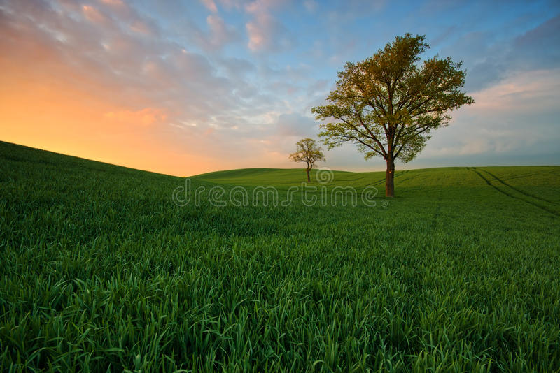 Trees Spring field during a beautiful sunset royalty free stock images