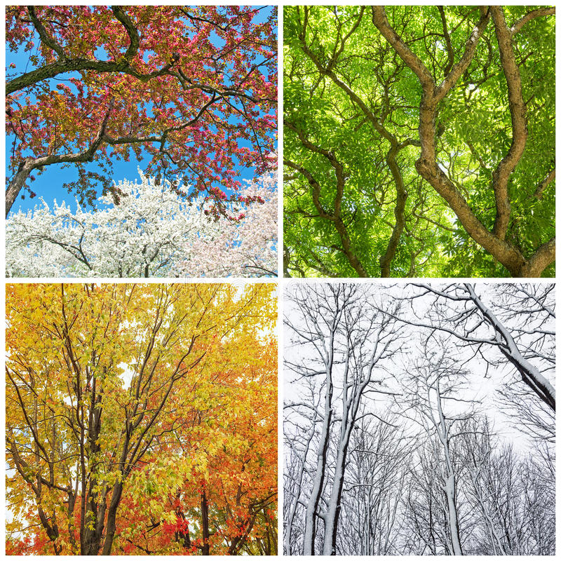 Trees In Spring, Summer, Autumn And Winter Stock Image ...
