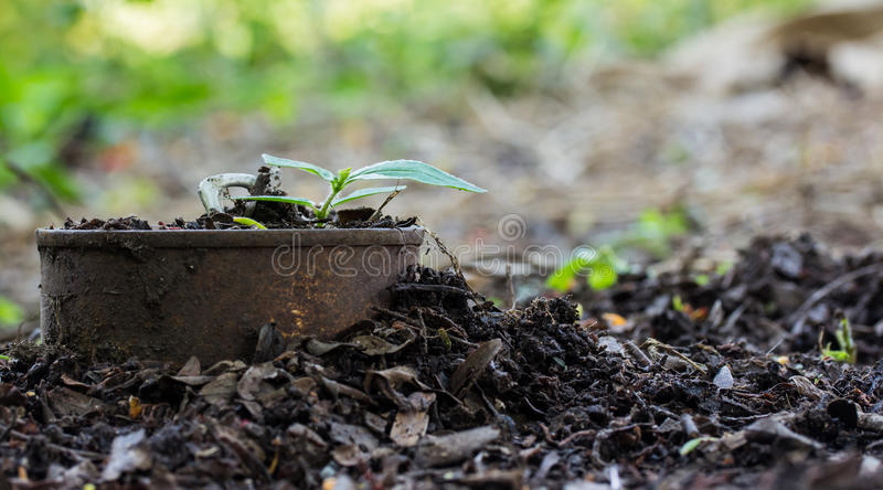 Trees sprouted in cans. Trees sprouted in rusty cans stock photos