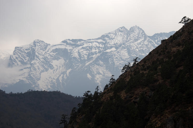Download Trees At Steep Slope And Snow Mountain, Himalayas Stock Photo - Image: 10568720