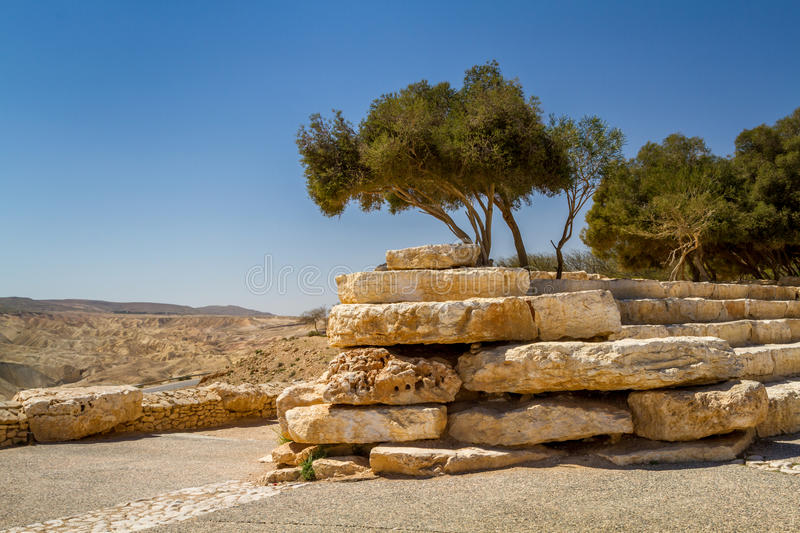 Trees on a stones, Ben Gurion national park in the Negev desert, Israel royalty free stock photography