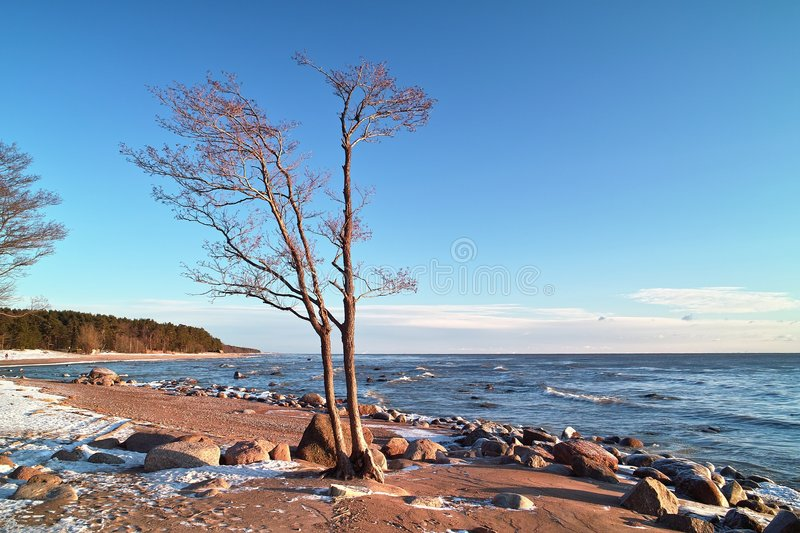 Download Trees And Stones At The Sea Beach Stock Image - Image: 7655945