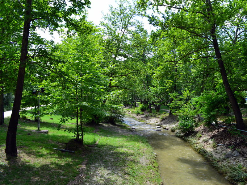 Download Trees and a stream stock photo. Image of green, river - 41419554