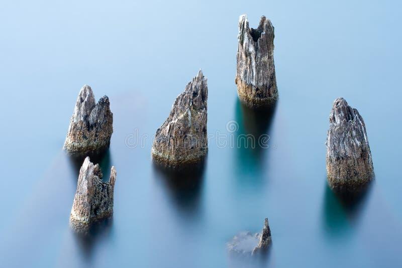 Trees submerged into water. Lake Ohrid stock image