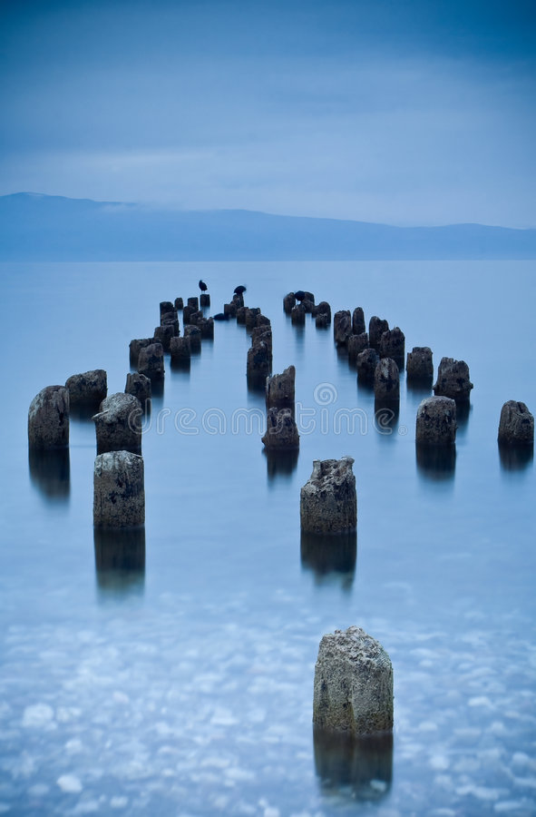 Trees submerged into water. Lake Ohrid stock photography