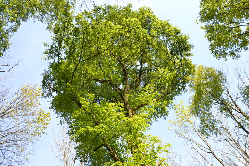 Trees stock images