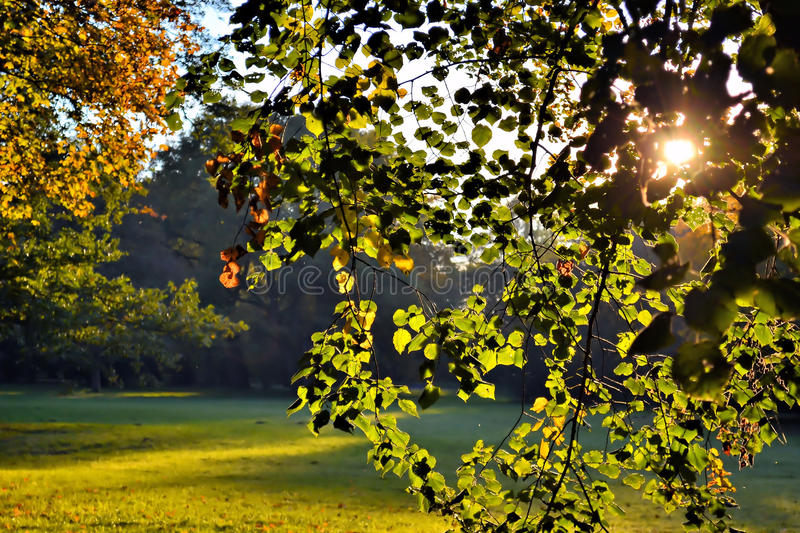 Trees In Sunlight Stock Photography