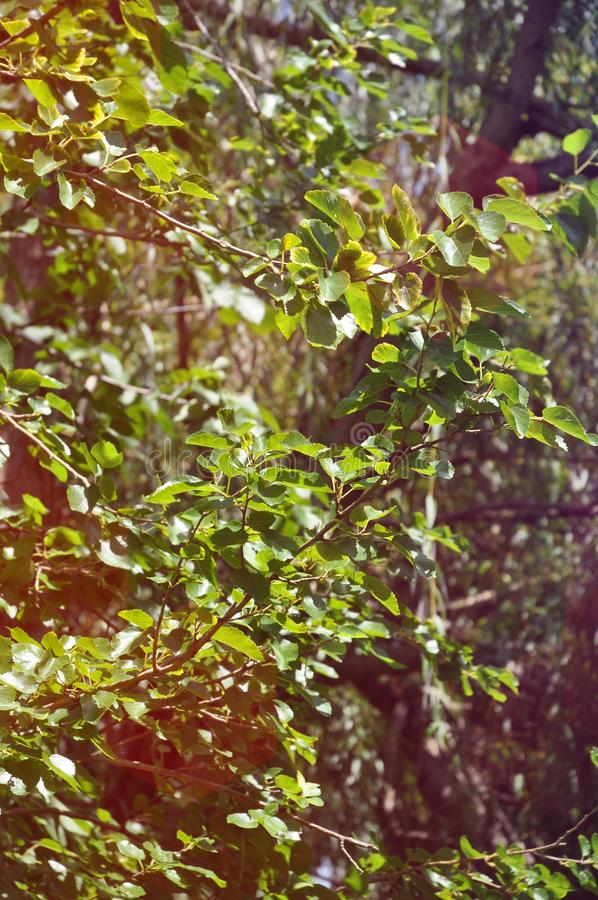 Trees in the Sunlight royalty free stock images