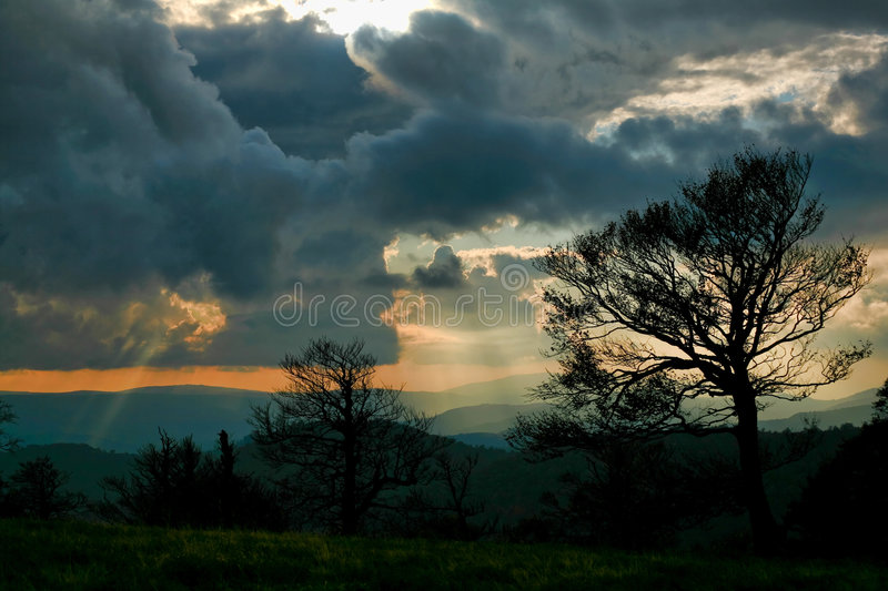Trees and sunrays royalty free stock photography