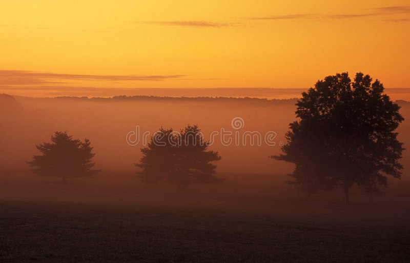 Download Trees And Sunrise Stock Photo - Image: 20000